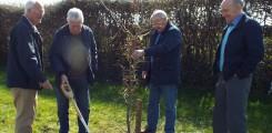 Phil Memorial Tree 2014